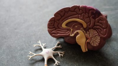 Exercise Your Way To A Healthier Brain